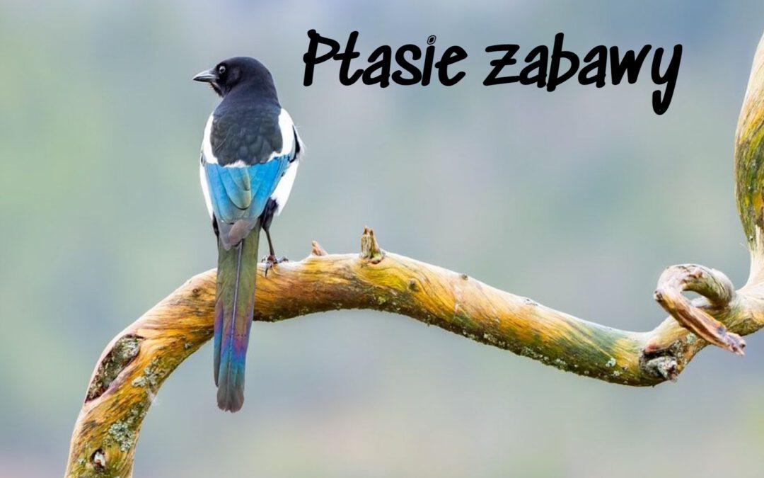 Piątek | Ptasie zabawy| www.radosneprzedszkole.pl